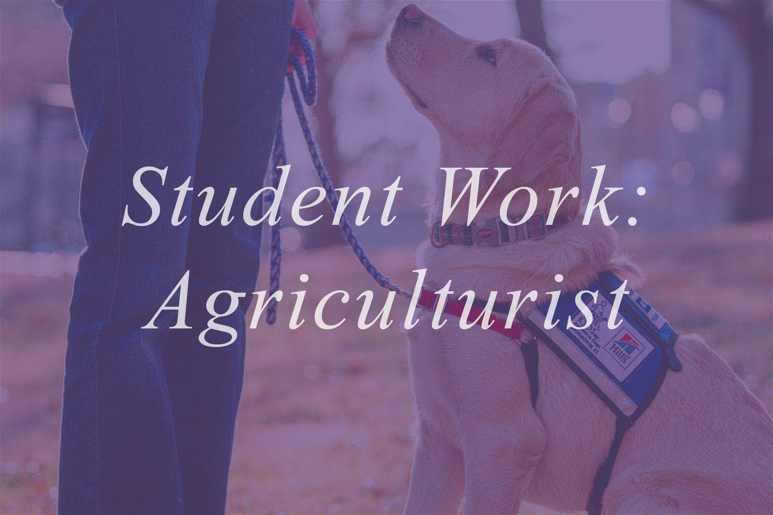 Click to go to Agriculturist magazines, work produced by students during their time in ACJ.